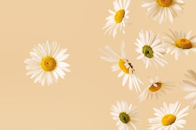 대담한 초현실적 인 사실적인 현대 카모마일 꽃이 떨어지고 하나가 고정됩니다.