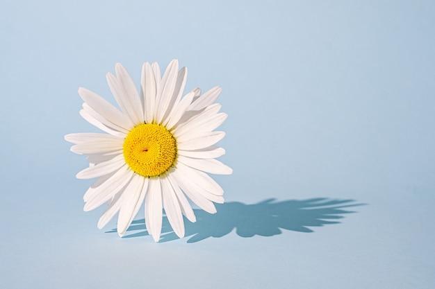 Смелый сюрреалистический тренд цветок ромашки на синем фоне.