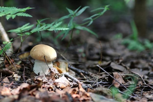 Подберезовики гриб капля воды