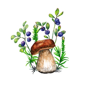 Boletus mushroom, green grass and small bush with blueberries. watercolor painting.