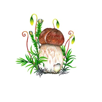 Boletus mushroom, green and red moss grass. watercolor painting.