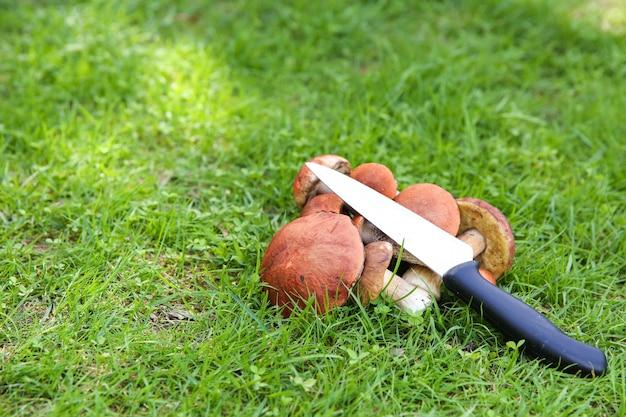 草の上のヤマドリタケとナイフ