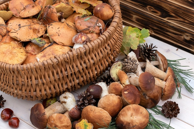 Boletus mushrooms in basket. rustic style, natural day light.