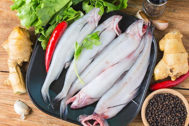Bombay duck fish