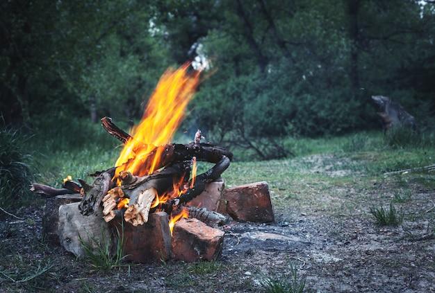 春の森でbonき火