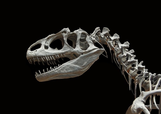 Костей скелета доисторического динозавра аллозавр