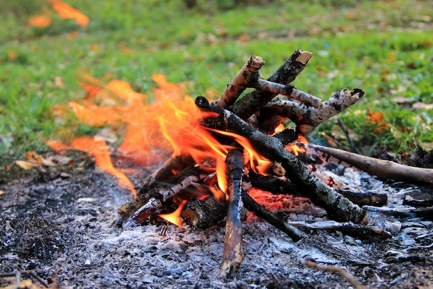 Bonfire in the autumn forest.