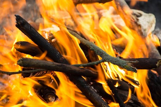 숲에서 모닥불.