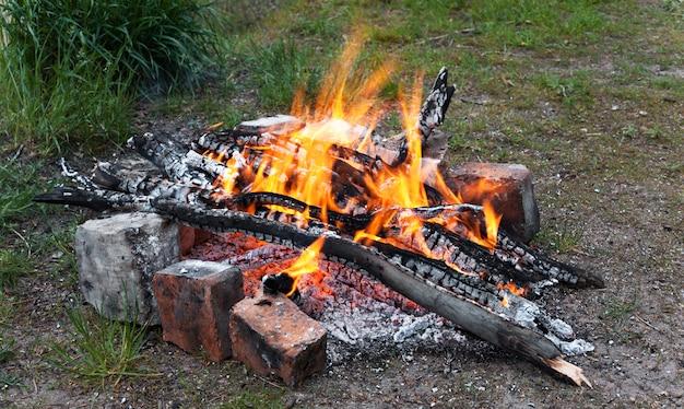 봄 숲에서 모닥불
