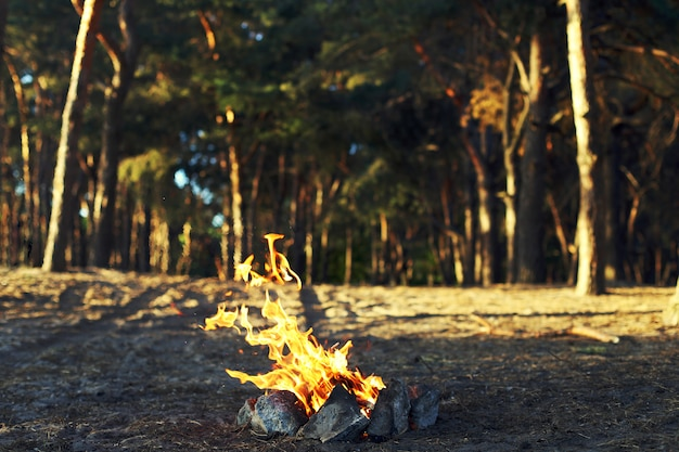 A bonfire in a pine forest.
