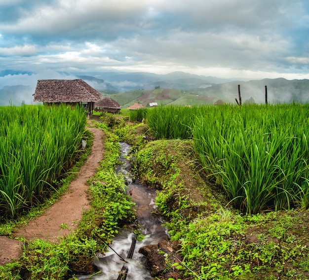 Bong piang rice terraces in chiang mai, thailand.