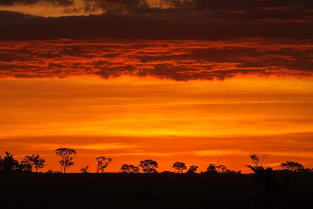 ボニートマトグロッソドスルブラジル木々のシルエットに日光が降り注ぐ雲が沈む夕日