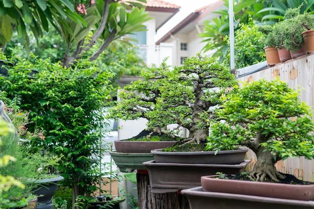 盆栽は縮んだ小さな木です。