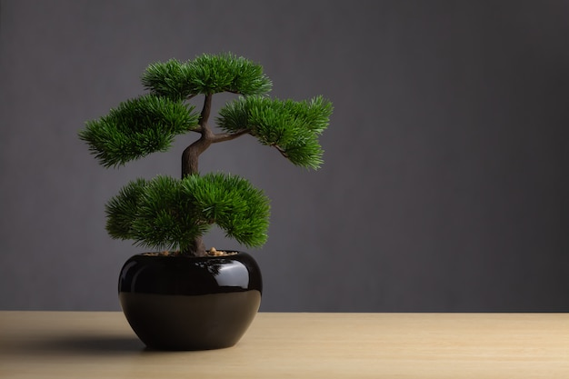 Bonsai on the desk. the backdrop is a dark gray background.