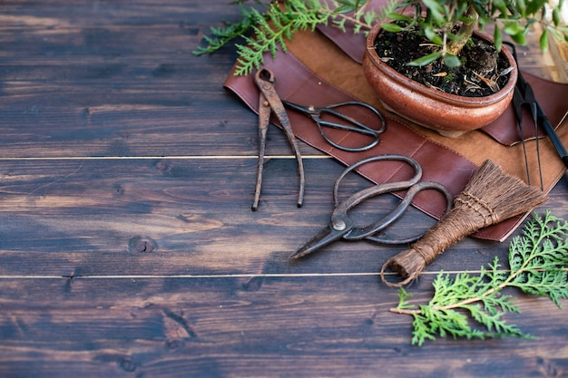 Bonsai tools on wooden background