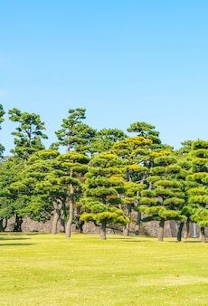 Bonsai tree in the garden of imperial palace at tokyo city