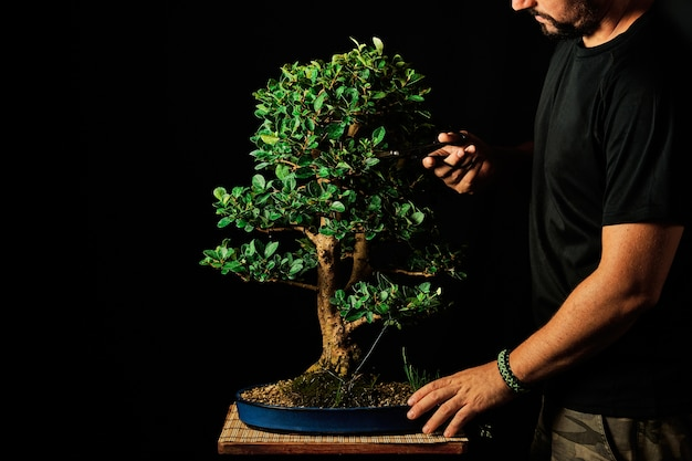 黒い背景にガーデニングの概念の盆栽。