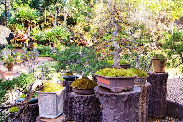 Bonsai trees in a pot in a park of flowers
