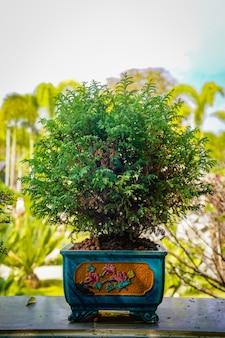 Дерево бонзаи на деревянном столе в саду.