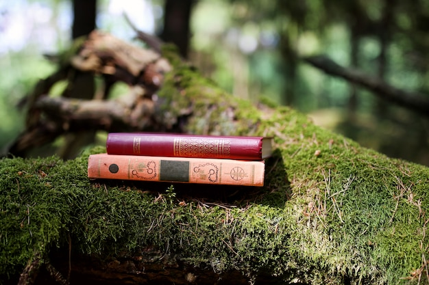Book outdoor. knowledge is power. book in a forest. book on a stump