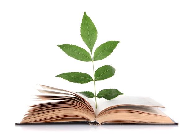 Книга с растением, изолированным на белом