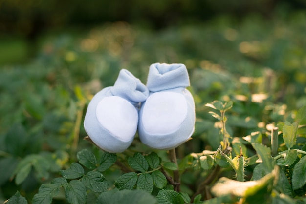 Booties of a newborn baby blue on the green branches of a bush