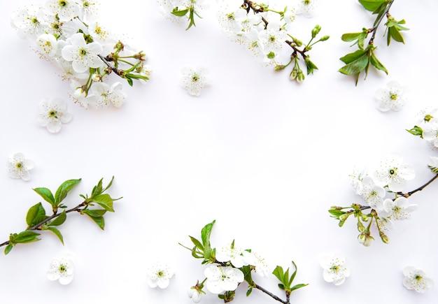 美しい白い花の枝とボーダーの背景。
