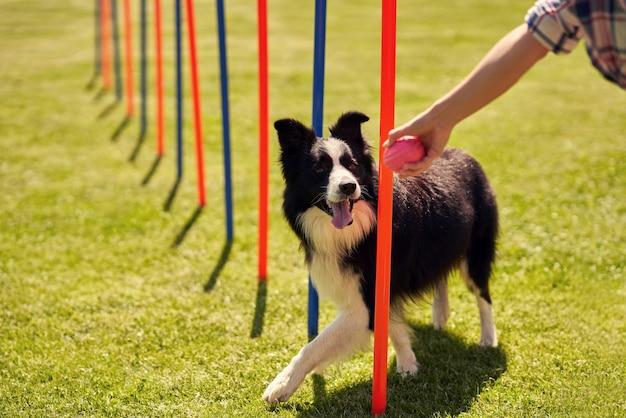 ボーダーコリー犬と敏捷性の分野の女性
