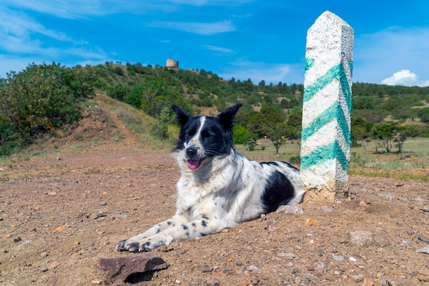 A border collie dog is lying near a post with green stripes.