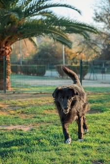 Бордер колли собака работает в парке