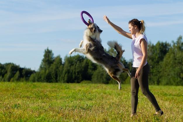 보더 콜리 개. 한가롭게 이리저리 거닐다. 재생합니다. 점프. 뛰어 다니다. 훈련. 들. 일. 여름. 태양