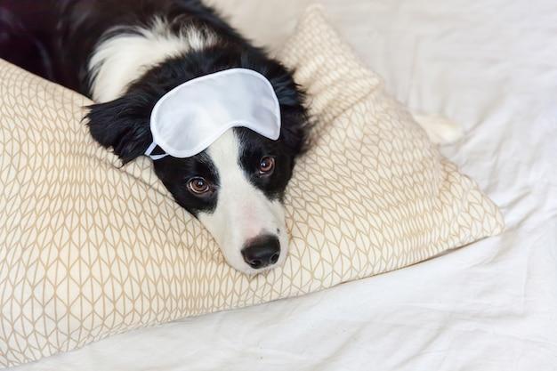 Пограничный колли с маской на глаза лежал на подушке одеяло в постели.