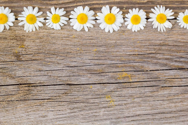Border of daisy chamomile flowers on wooden background