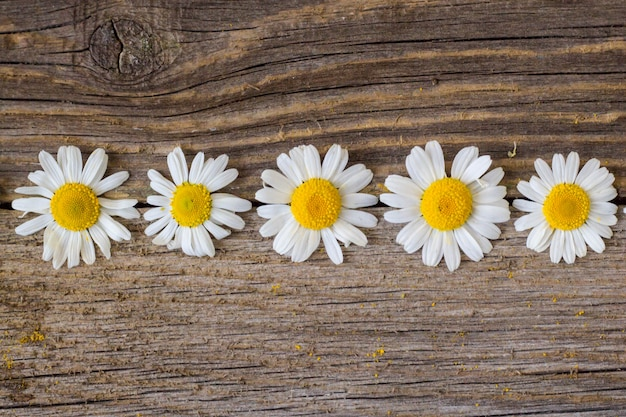 Border of daisy chamomile flowers on wooden table. view with copy space
