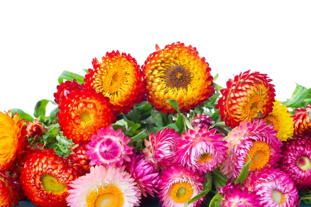 Border of everlasting flowers bouquet  isolated on white background