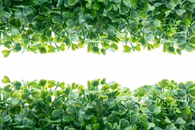 흰색 바탕에 녹색 잎과 식물로 만든 테두리 프레임.