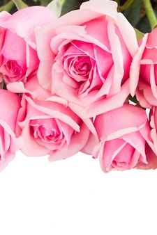 Border  of fresh pink  roses close up  isolated on white background