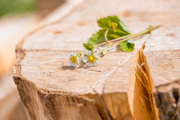 Border of fresh strawberries with growing runners and flowers. on old wooden background.