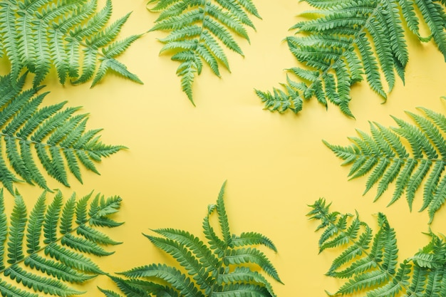 Border leaves of fern on yellow. top view, summer.