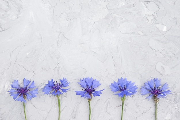 Border made small blooming blue cornflower flowers on gray stone background with copy space. concept hello spring or summerstcard