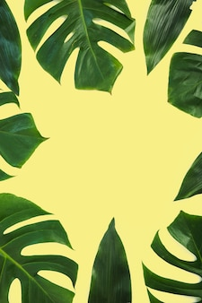 Border made with monstera leaves on yellow background
