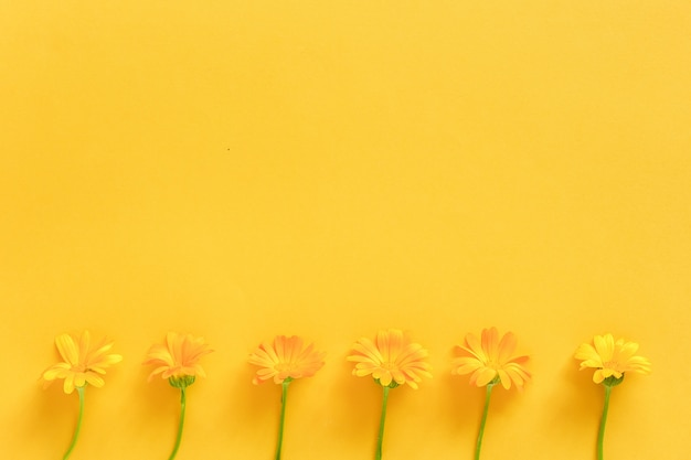 Border made with orange calendula flowers on yellow background. concept hello spring or summer
