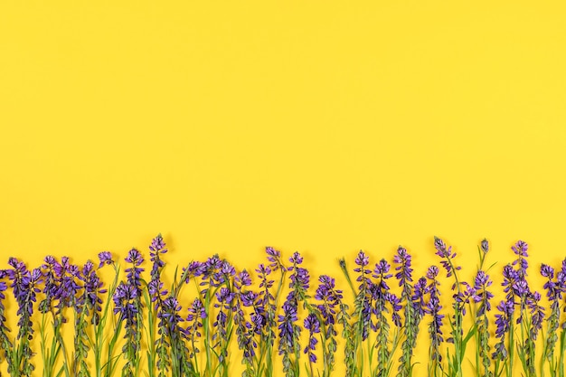 Border made with purple flowers on yellow background. concept spring or summer backdrop.