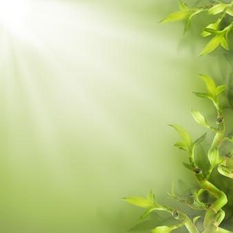 笹の葉の境界線、緑の自然の背景