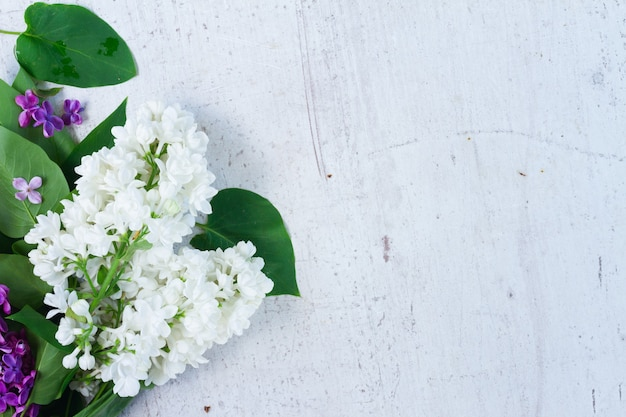 白い木製の背景にライラックの花の境界線