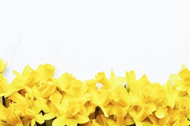Граница желтого нарцисса или нарцисса на белой стене. плоская планировка, копирование пространства для текста