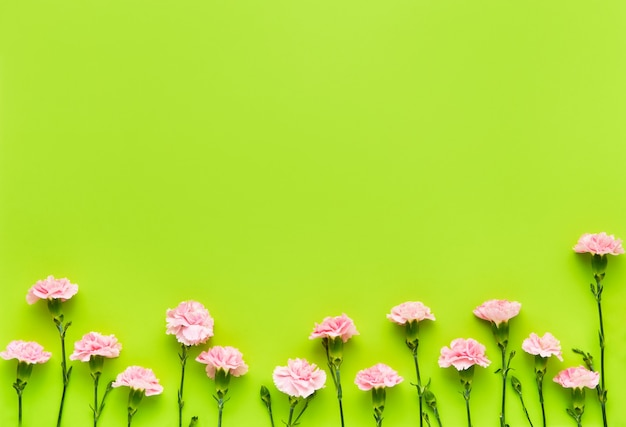 Border of pink carnation flowers on bright green background mothers day valentines day birthday