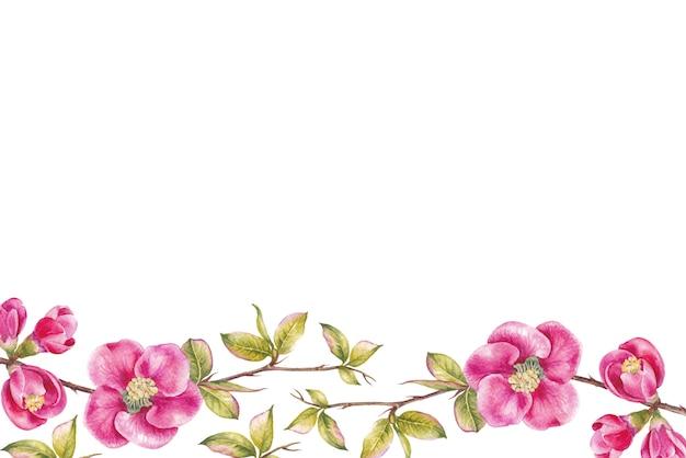 Border of pink cherry flowers.