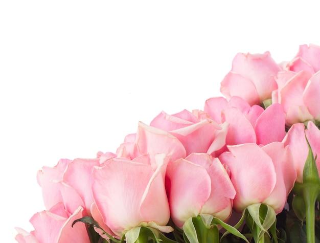 Border  of  pink fresh roses  isolated on white background
