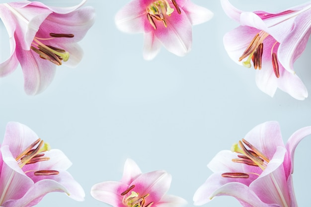 Border of pink lily flowers on light blue background. space for text.